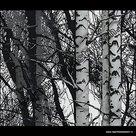 statische raamfolie bomen