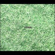 Plakfolie-Gras