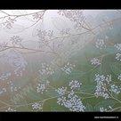 Statische raamfolie Nature 45cmx1,5m